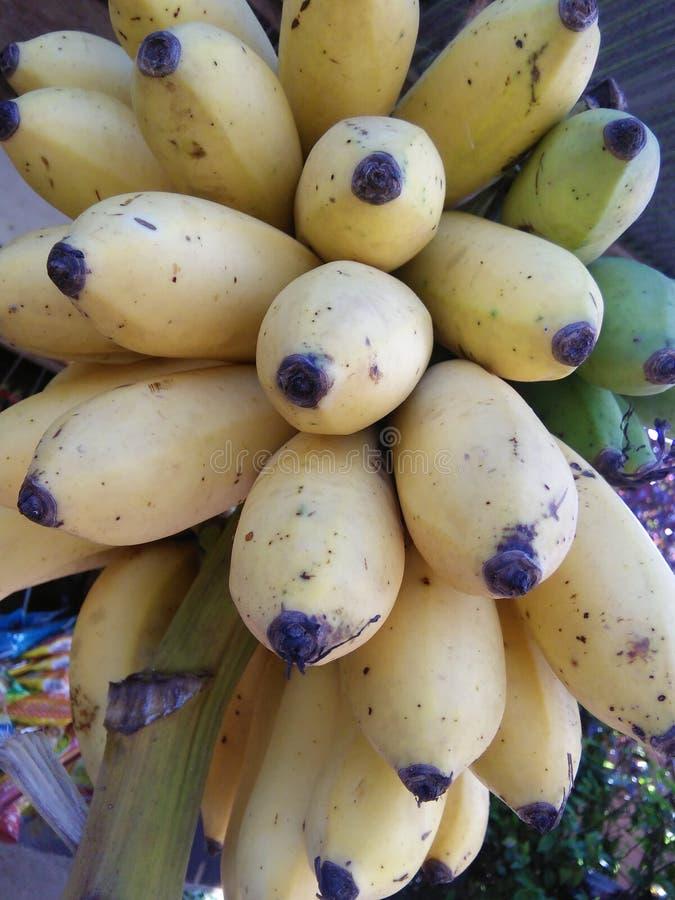 Banane très douce de sri lankan image libre de droits