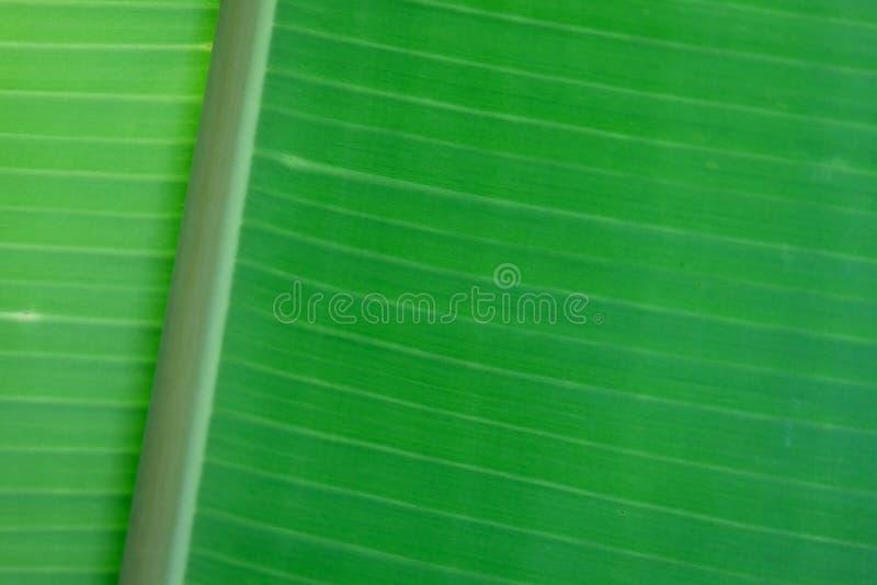 Bananen-Blatt-Abstraktion lizenzfreie stockfotografie