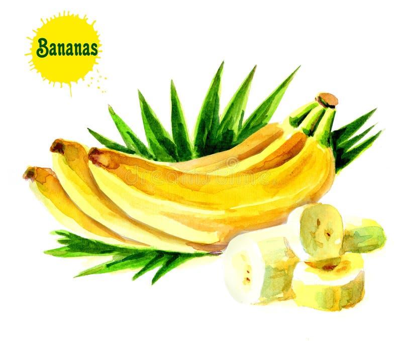 Bananen mit Blättern Bündel der frischen Bananenfrüchte auf einem weißen Hintergrund, eine Sammlung Rasterillustrationen stock abbildung