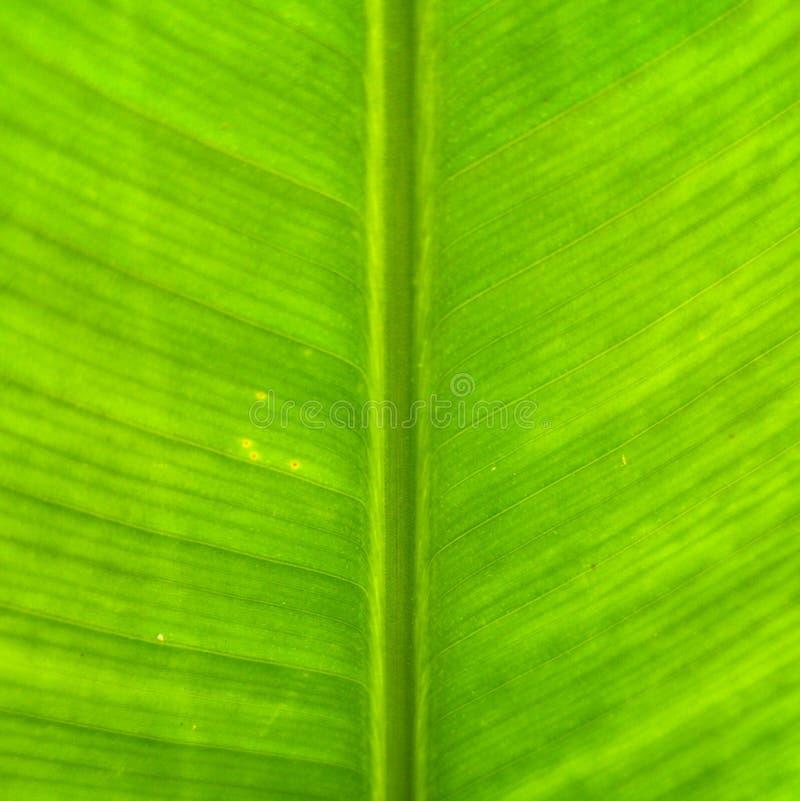 Bananenblattbeschaffenheit stockbild