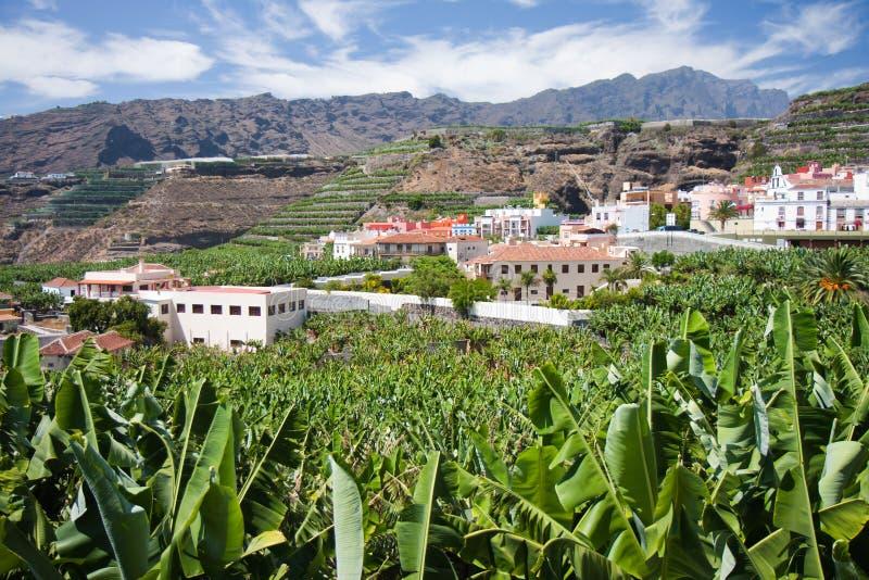 Bananenplantage in Tazacorte, La Palma stockfoto