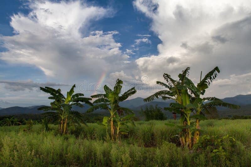 Bananenstauden mit erstaunlichem bewölktem blauem Himmel und Regenbogen, tropische Landschaft mit schönen Farben lizenzfreie stockfotografie