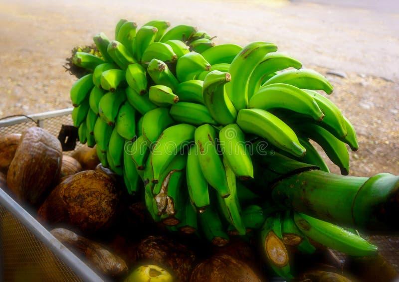 Bananer på stjälk arkivbilder