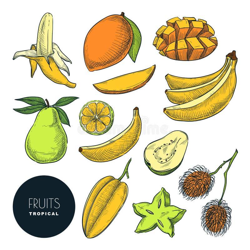 Bananes et d'autres fruits exotiques tropicaux Illustration de croquis de couleur de vecteur Ensemble tir? par la main d'?l?ments illustration libre de droits