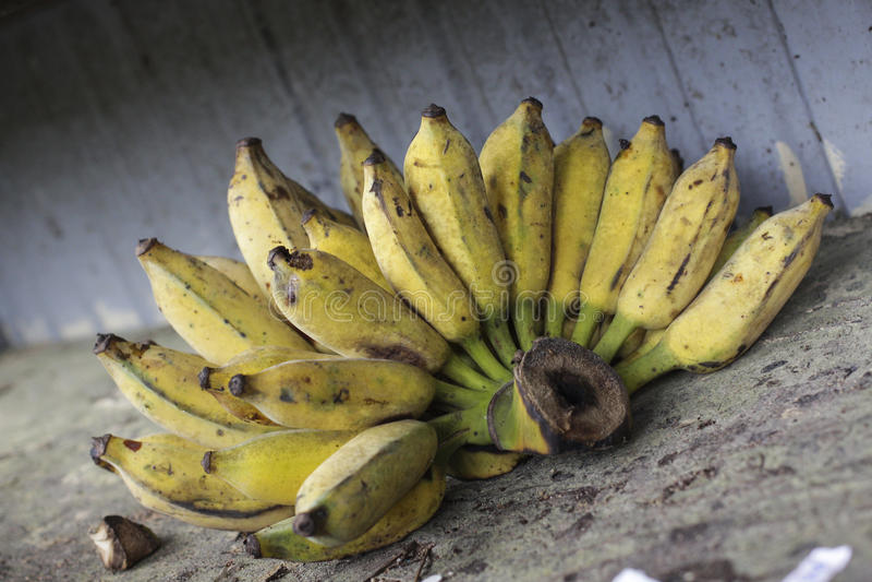 Bananes jaunes mûries image libre de droits
