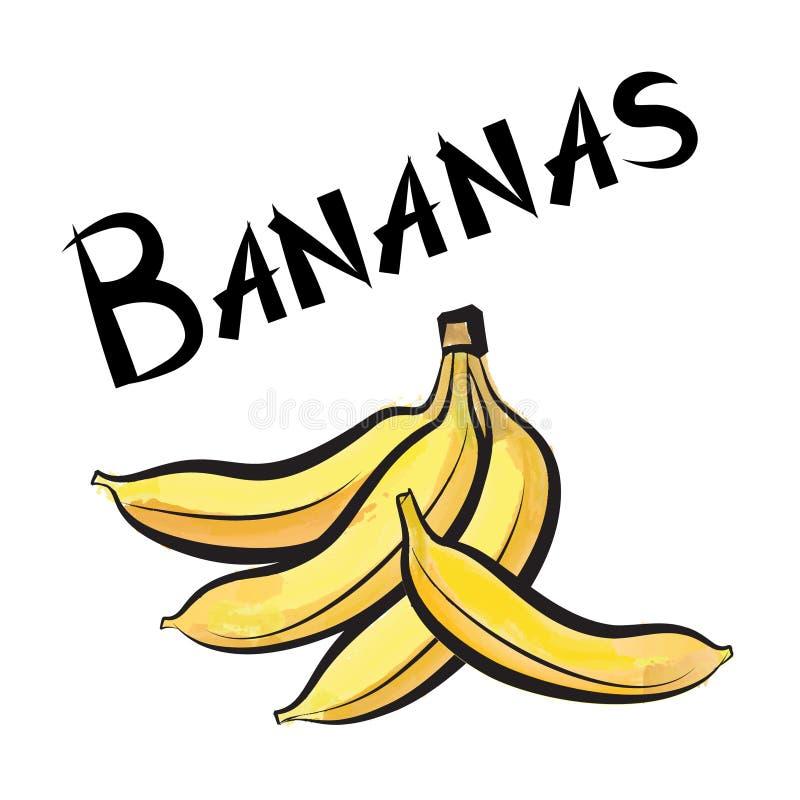 Bananes Label Exotique De Banane De Fruit Ensemble Tiré Par La Main ...