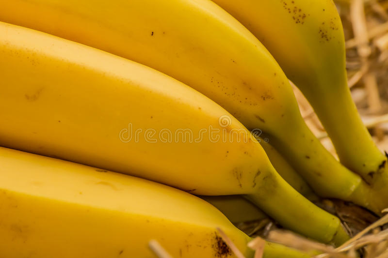 Bananes organiques, †latin « musa Fruits de banane sur le fond naturel de paille photos stock