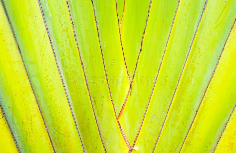 Bananier abstrait photos libres de droits