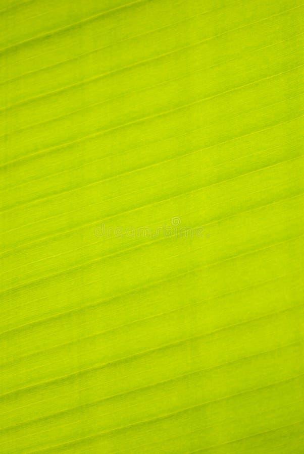 bananleaf arkivbild