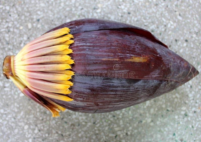 Bananmaninflorescence arkivbilder