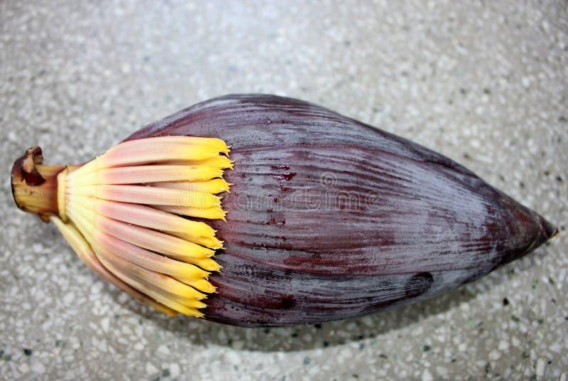Bananmaninflorescence arkivbild