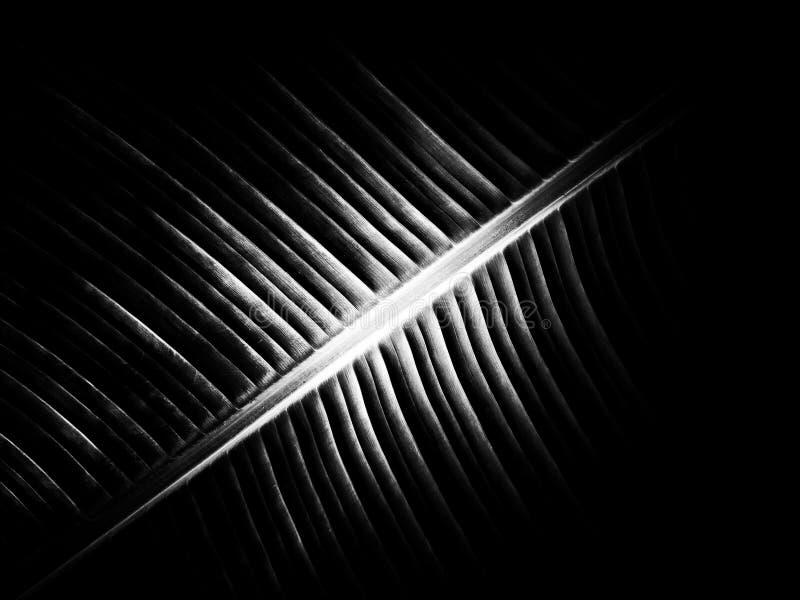 Bananowa liść tekstura na czarny i biały obrazy stock
