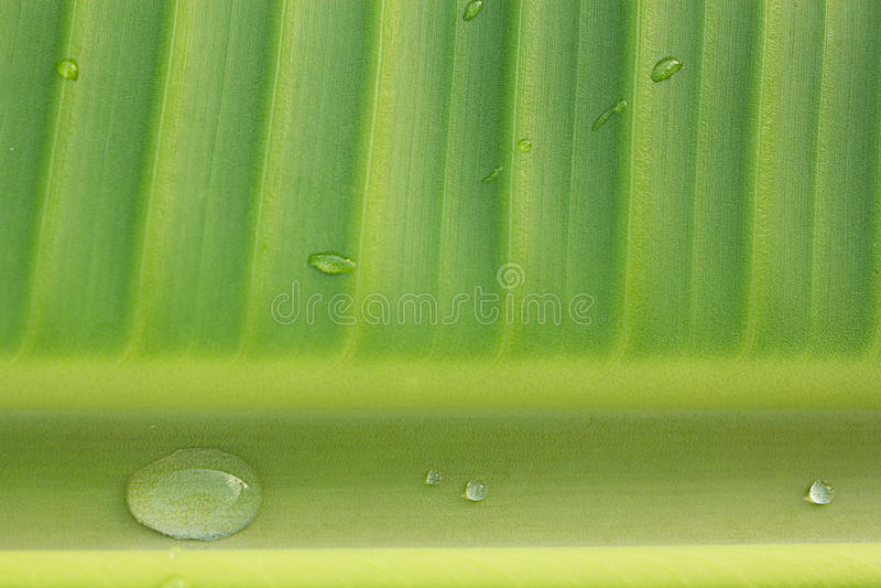 Bananowi liście zdjęcia stock