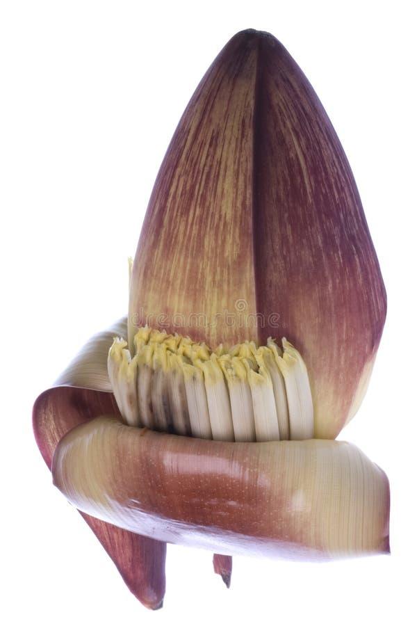 bananowy jadalny kwiat obraz stock