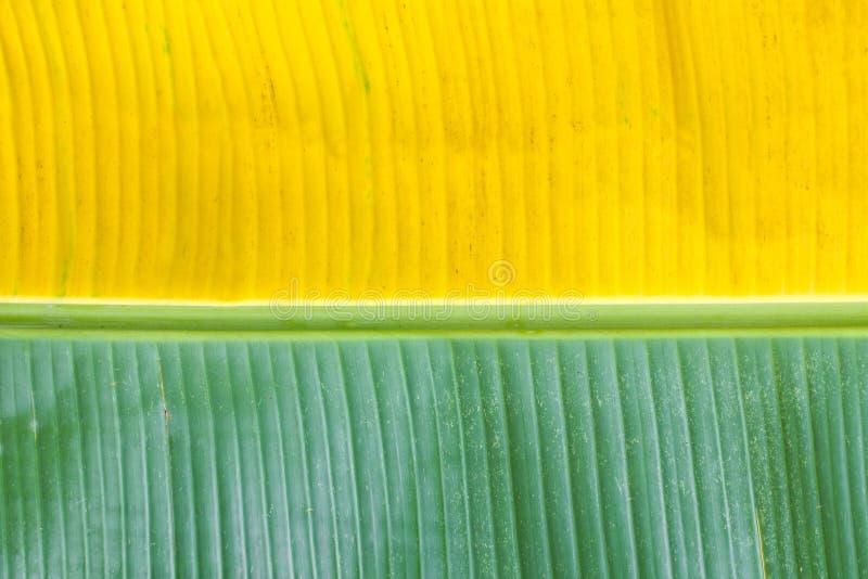 Bananowy liść. zdjęcia royalty free