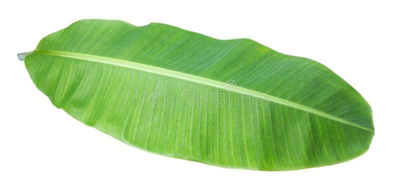 bananowy liść Odizolowywający na białym tle z ścinek ścieżką zdjęcia stock