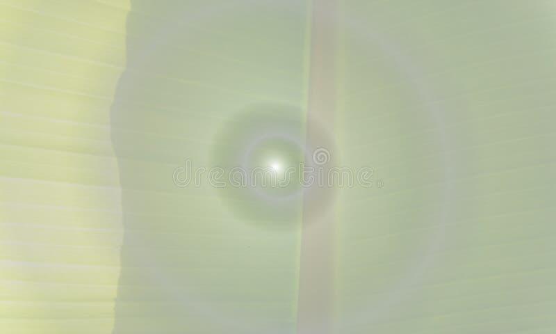 BANANOWY liścia LEKKIEGO COLOUR wektoru tło ilustracji