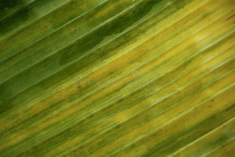 Bananowy liścia wzór dla tła obraz royalty free
