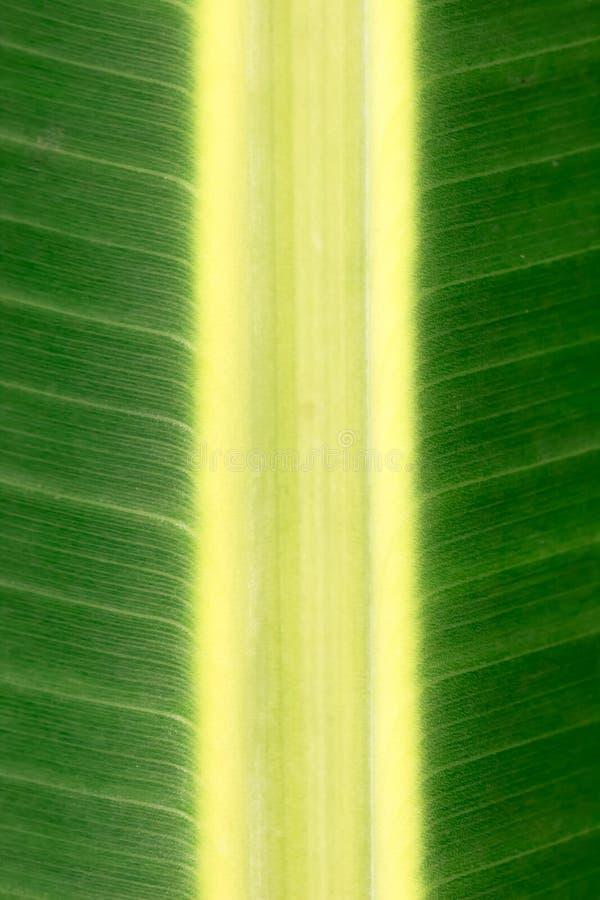 bananowy palmowy liść zdjęcia stock