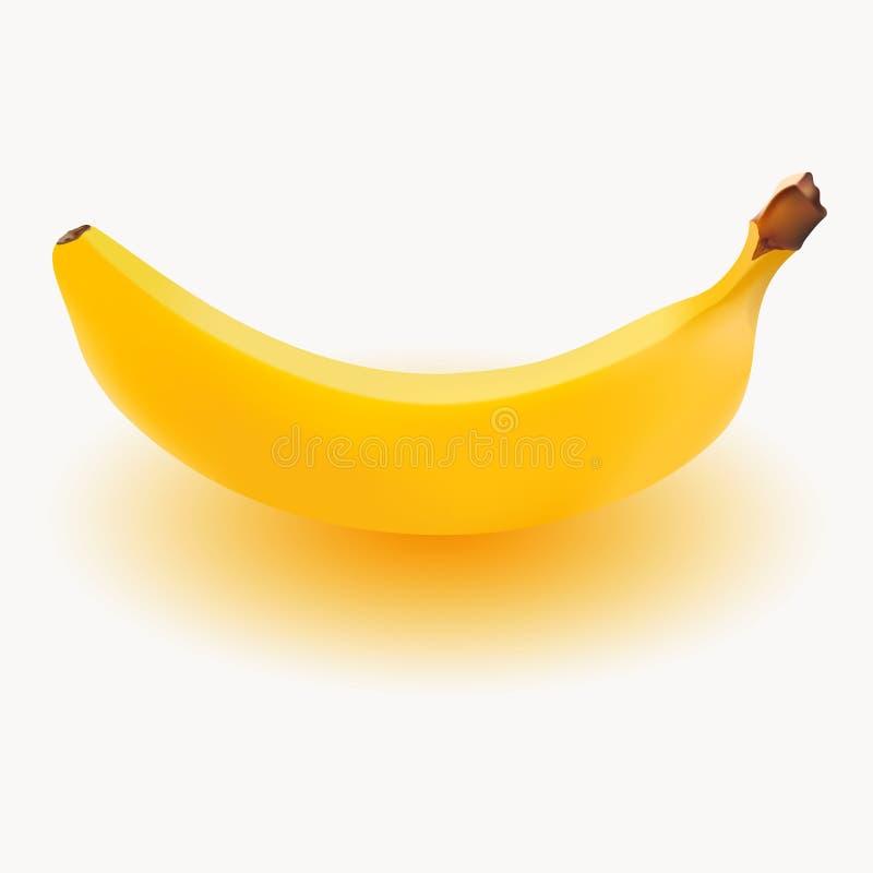 Bananowy realistyczny wektor Odizolowywający na białym tle ilustracji