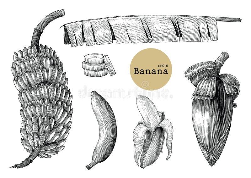 Banansamlingsuppsättningar räcker illustrati för teckningstappninggravyr stock illustrationer