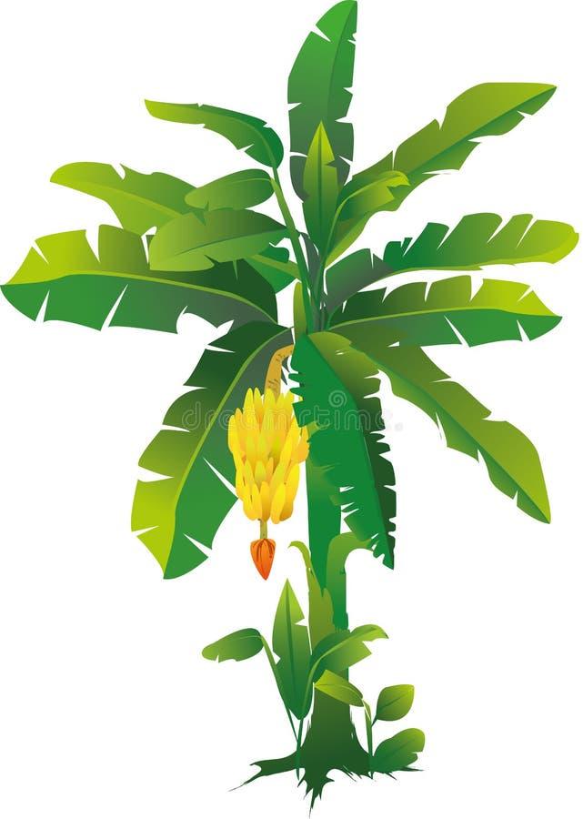 Bananträd stock illustrationer