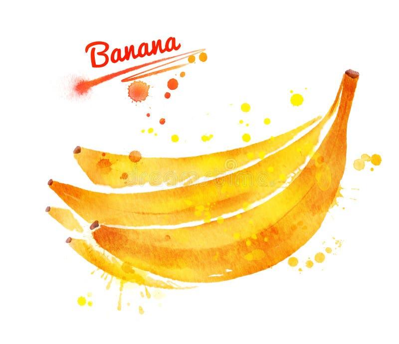 banany bunch unpeeled ilustracja wektor