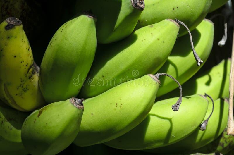 Banany na Drzewie zdjęcie royalty free