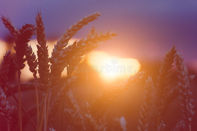 Banatka dekatyzuje w wieczór zmierzchu światła racach z serce formą Naturalne światło plecy zaświecający Piękny słońce migocze bo obraz royalty free