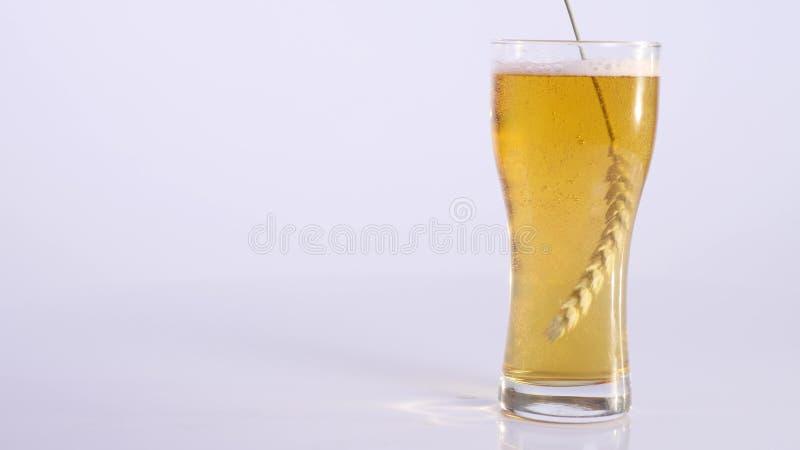 Banatka na szkle piwo na białym tle fotografia stock