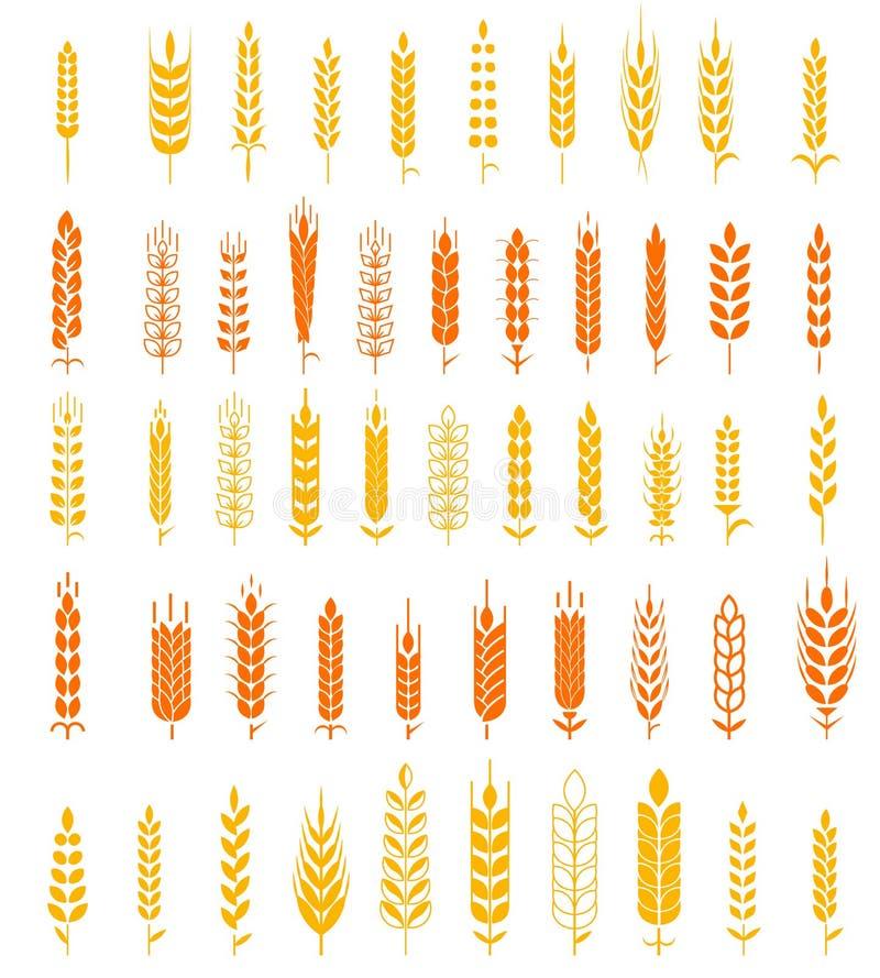 Banatka Ucho Ikona i Logo Ustawiający Naturalnego Produktu Firma i Rolnej firmy Organicznie banatka, chlebowy naturalny i rolnict ilustracja wektor