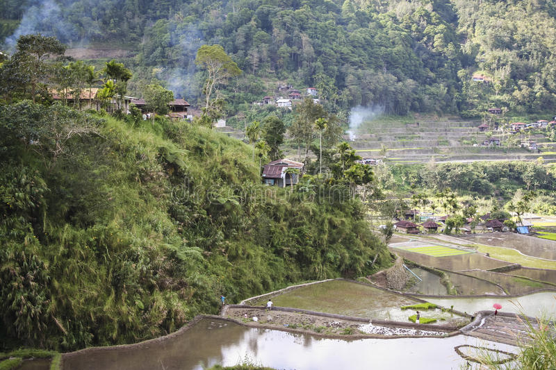 Download Banaue Reisterrassen Luzon Philippinen Stockfoto - Bild von paddys, steil: 27727504