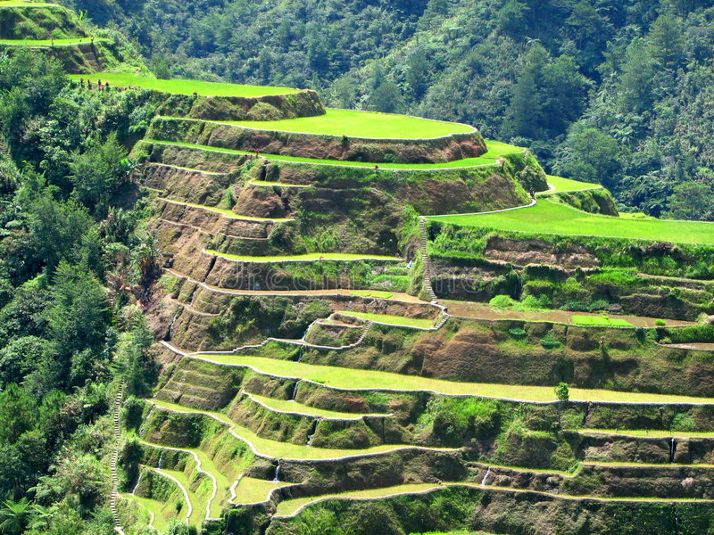 Banaue Rice Terraces 2. A close-up of the rice terraces of Banaue, Philippines stock photos