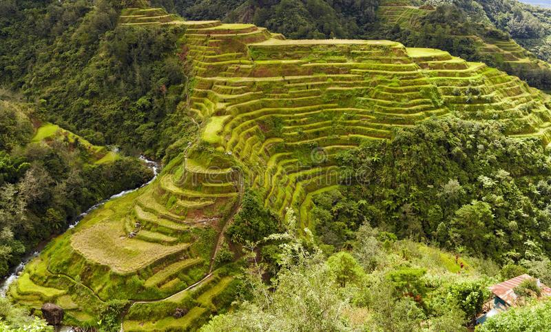 Download Banaue terraces stock image. Image of east, farmer, philippines - 27542743