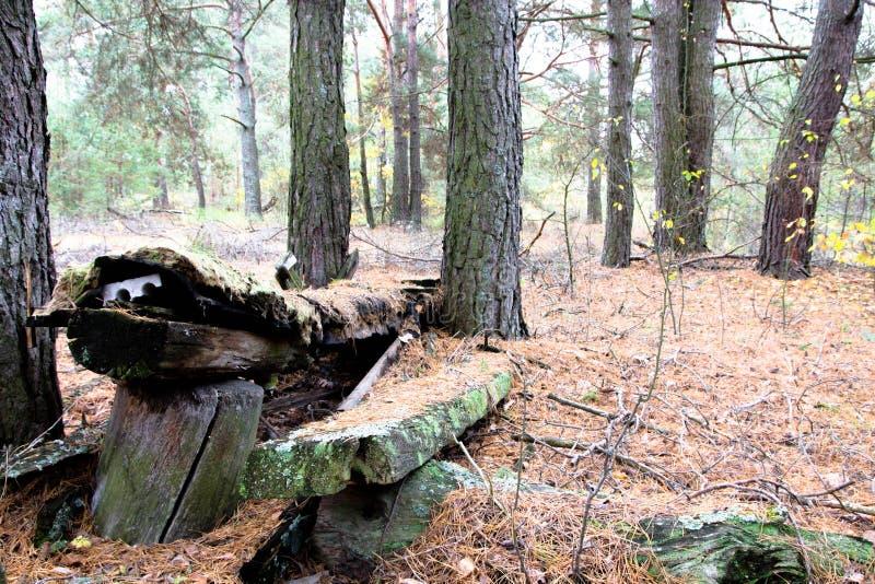 Banc abandonné dans la forêt photos libres de droits