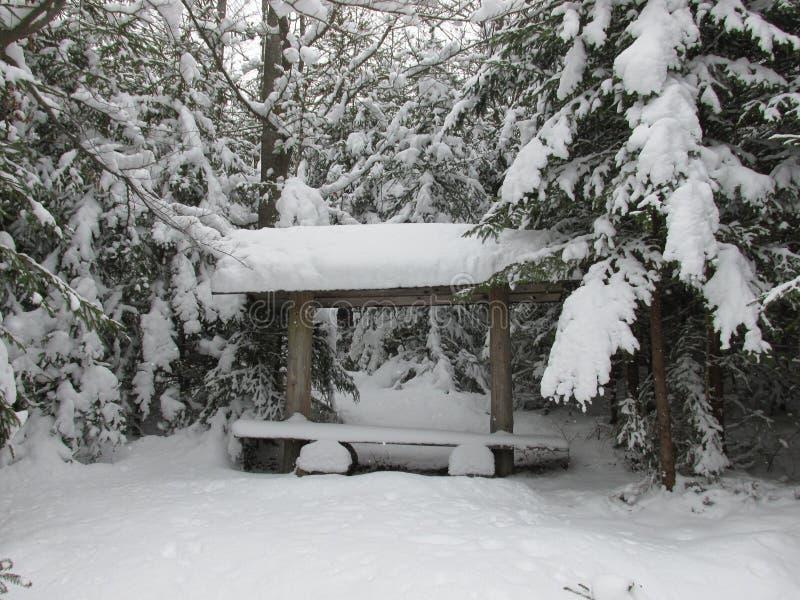 Banc de forêt d'hiver images stock