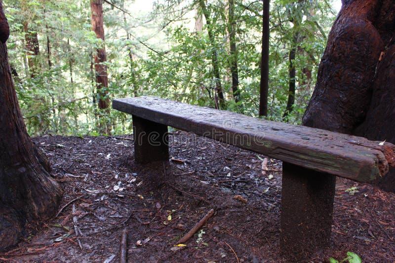 Banc de forêt de séquoia images stock