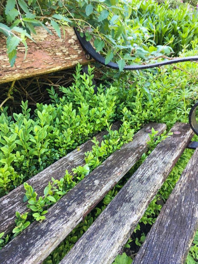 Banc de jardin envahi par les plantes vertes images stock