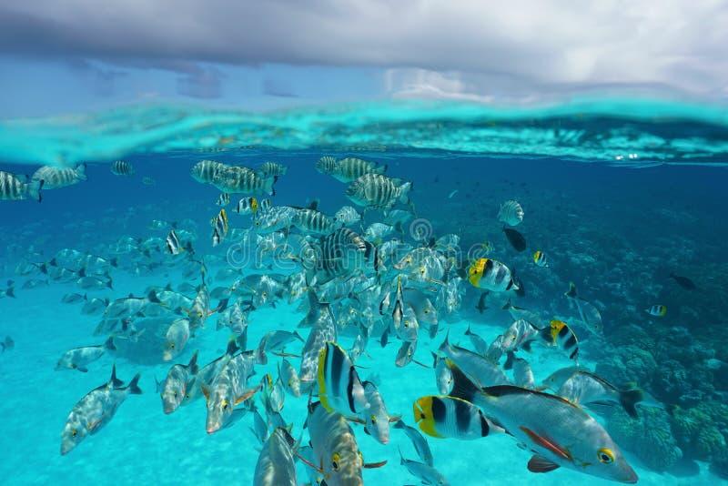 Banc des poissons tropicaux sous-marins avec le ciel nuageux images stock