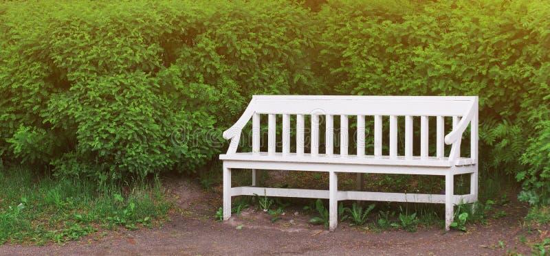 Banc en bois blanc dans un temps de parc de ville au printemps et arbres sur le fond Chaise de jardin verte vide à l'herbe d'été images stock