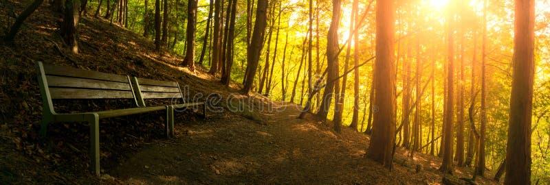 Banc en bois situé sur le chemin de promenade dans la forêt du h élevé photographie stock libre de droits