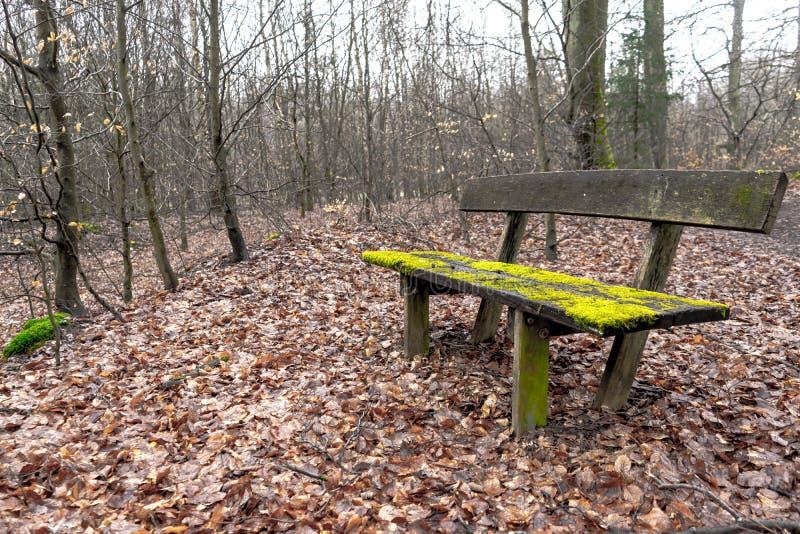 Banc en bois très vieux couvert dans la mousse au milieu d'une forêt photographie stock libre de droits