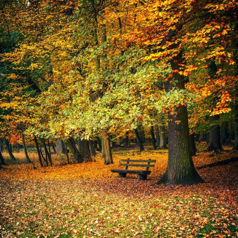 Banc en parc d'automne photos libres de droits