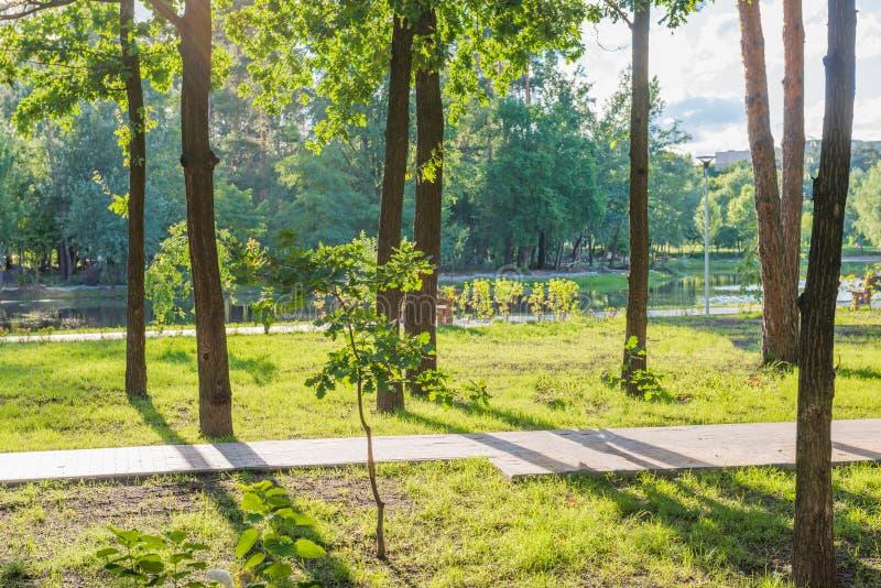 Banc en parc ensoleillé vert photos libres de droits