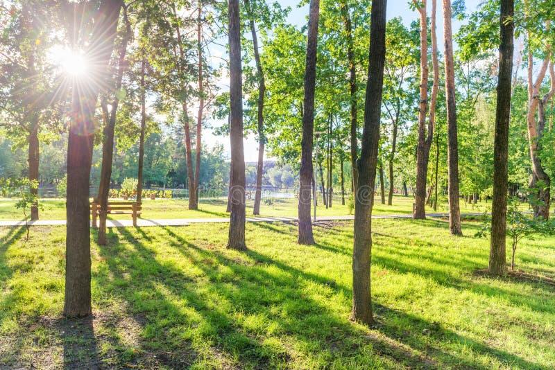 Banc en parc ensoleillé vert photo stock