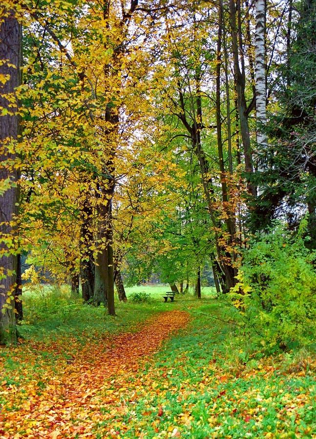 Banc en stationnement d'automne photo libre de droits