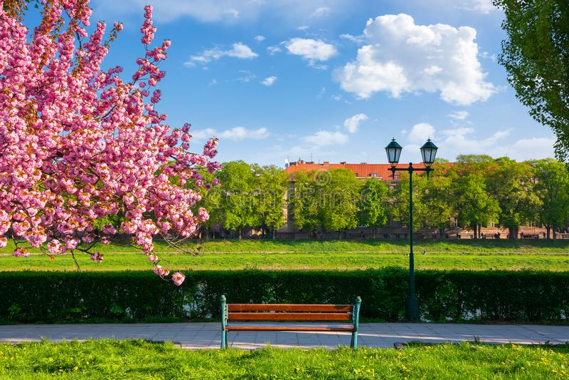 Banc, lanterne et arbre de floraison de Sakura image stock