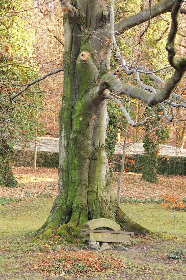 Banc sous l'arbre images stock
