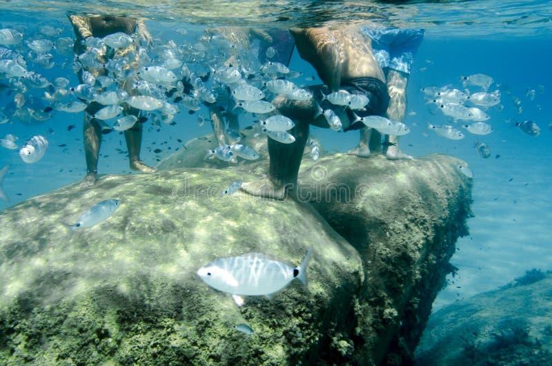 Banc sous-marin des poissons avec des personnes nageant autour photographie stock libre de droits