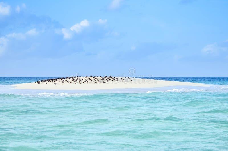 Banca della sabbia fotografia stock libera da diritti
